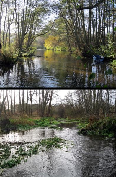 Woody debris rewilding paper backs up WTT approaches