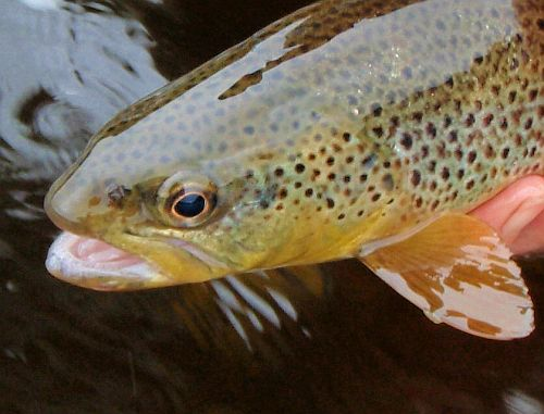 Wild Trout Trust Get Together