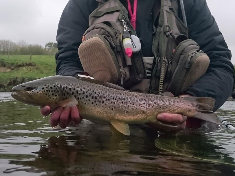 Deveron sea trout