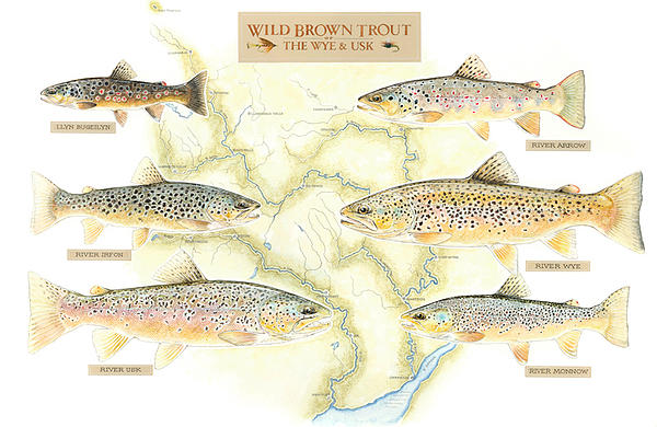 WUF trout and map print