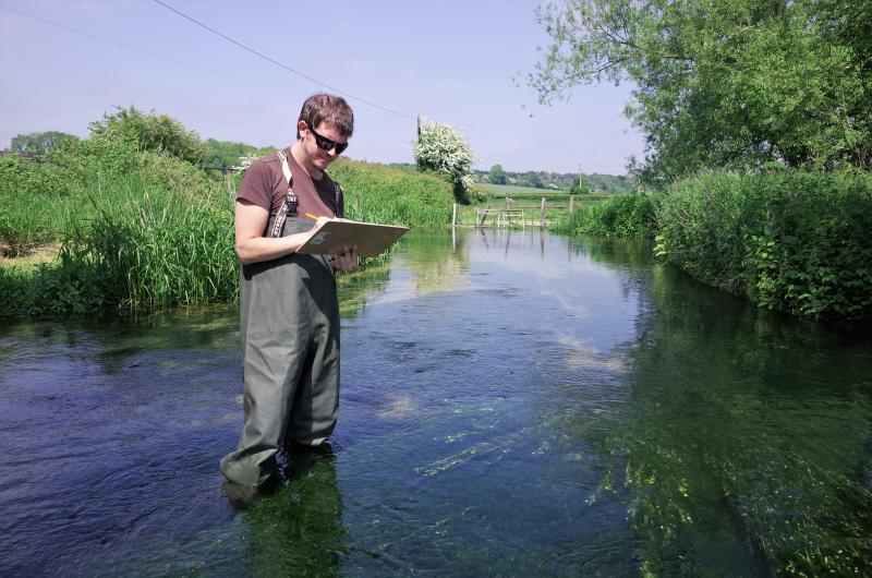 Can watercress farming directly impact fish communities in chalk streams?