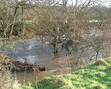Have trees fallen into your river in the recent storms?
