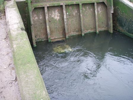"""Pet door"" type aperture fitted to the main top-hung tidal flap gate, River Stiffkey, Norfolk"