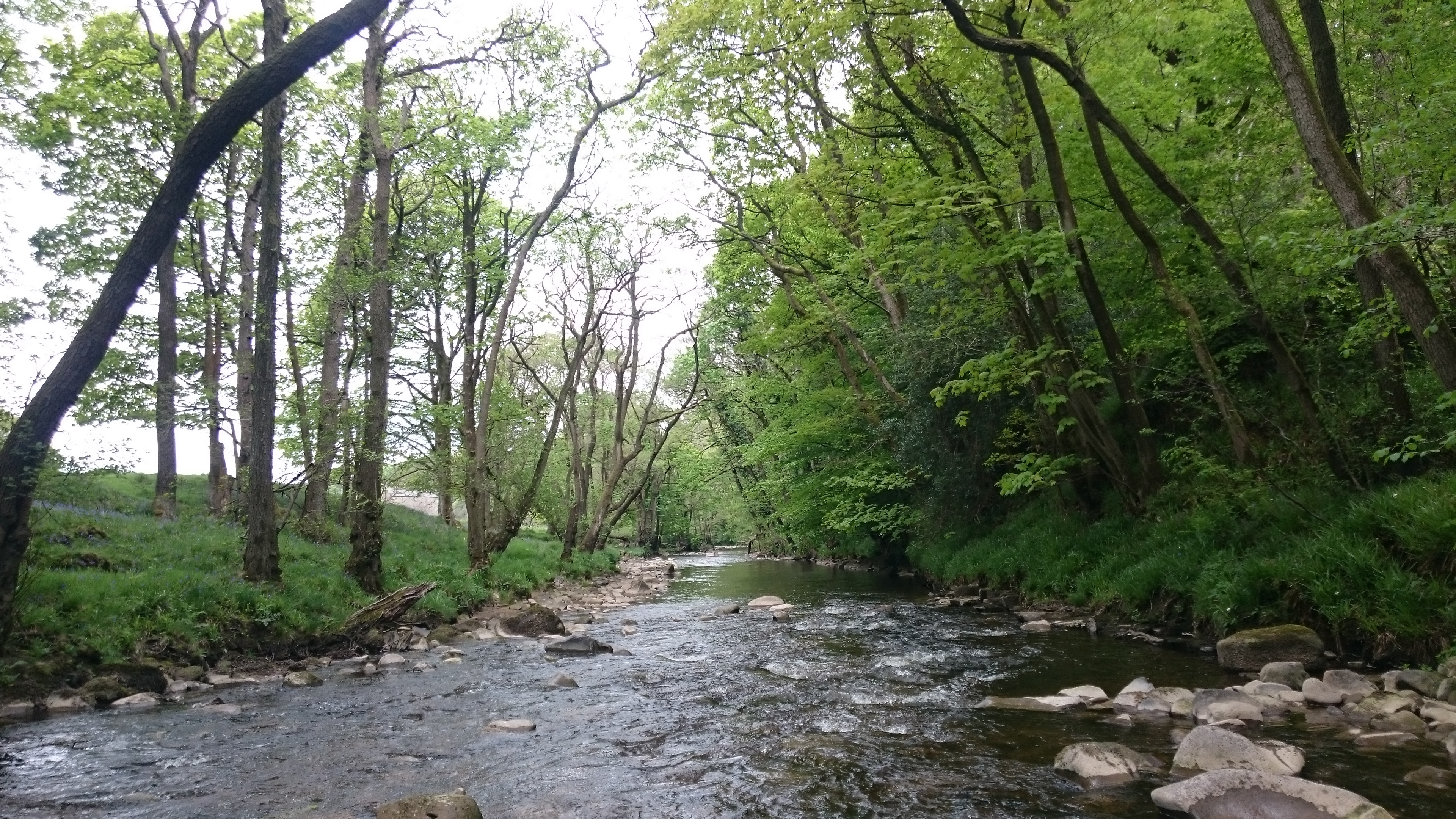 'Woodlands for Water' initiative announced by Defra