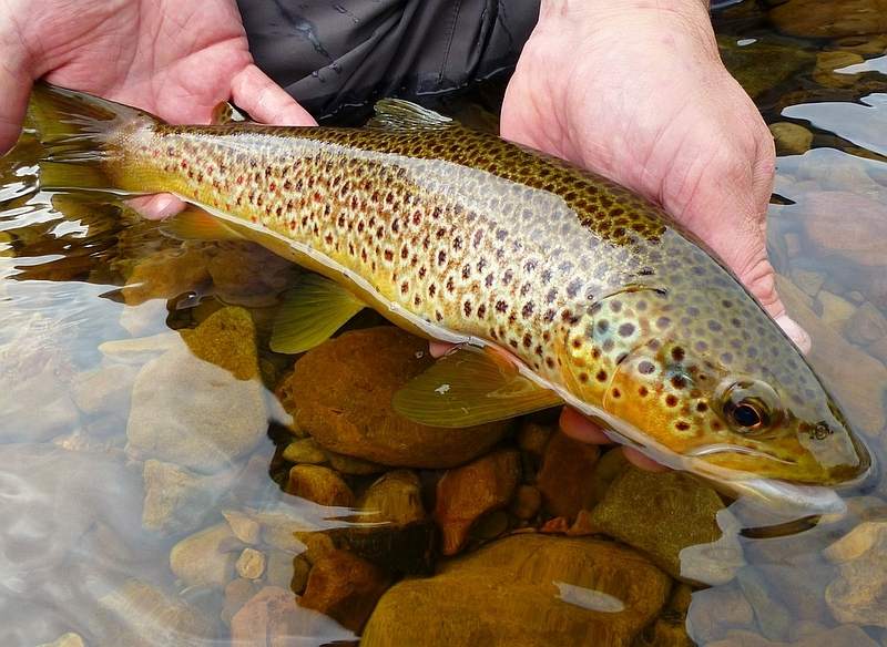 New Catch and Release page on the WTT website