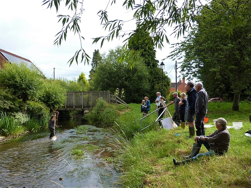 Riverfly monitoring with a TWIST!