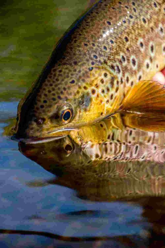 wild trout projects rivers fishing advice in uk and ireland wtt