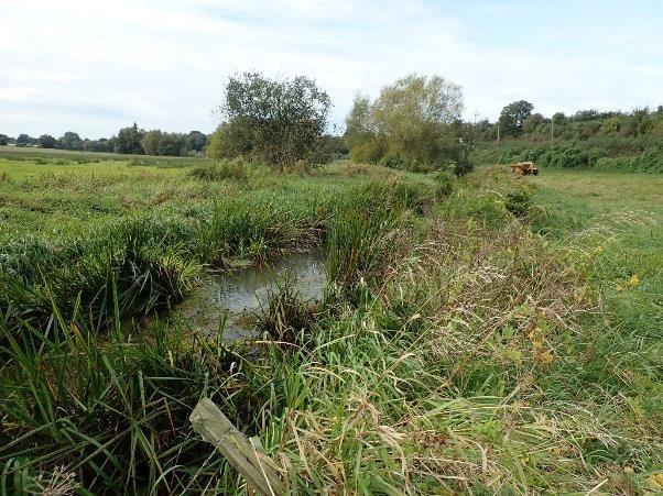 River Darent at Eynsford gets a make-over