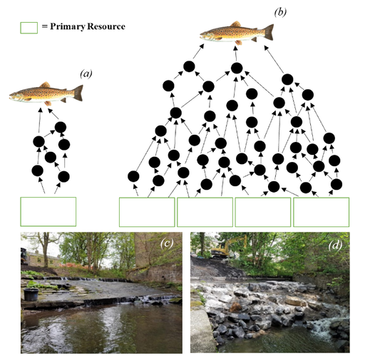 Can stable isotopes reveal an impact of small scale river restorations?